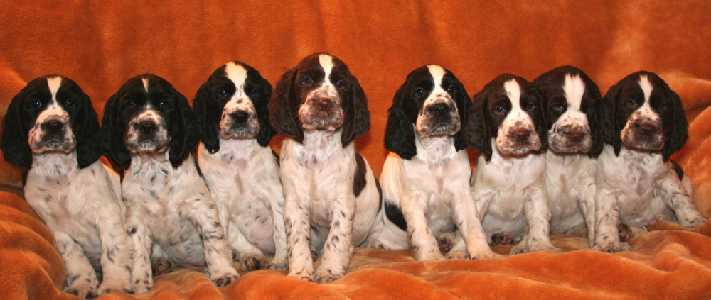 E-litter 8 weeks old